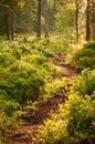 Forest In Soerknatten Nature R...