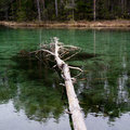 Forest and source. Blue spring lake and old tree stump fallen into water. Royalty Free Stock Photo