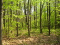 Forest in springtime sunshine Royalty Free Stock Image