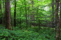 Forest in the springtime woods that are pretty and green with spring growth Stock Image