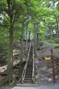 Forest Staircase Stock Photography