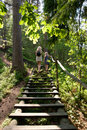 Forest stairs Stock Photography