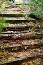 Forest steps Royalty Free Stock Photo