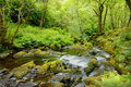 Royalty Free Stock Image Forest stream