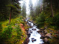 Forest stream fluent in foggy Royalty Free Stock Photography