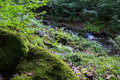 Forest stream mountain between trees and stones Royalty Free Stock Image