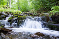 Forest stream mountain between trees and stones water splashing Royalty Free Stock Images