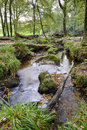 Forest stream running over mossy rocks on the edge of bodmin moor in cornwall Stock Photography