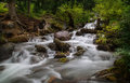 Forest stream running over rocks, a small waterfall Stock Photos