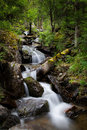 Forest stream running over rocks a small waterfall sunny day summer Stock Photography