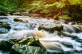 Forest stream at summer day Royalty Free Stock Photo