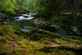 Forest streamlet somewhere in co kerry ireland Stock Photography