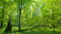 Forest at summer midday Royalty Free Stock Photo