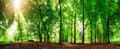 360 forest sun Royalty Free Stock Photo