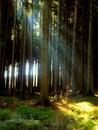 Forest and sun rays Stock Photos