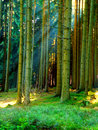 Forest and sun rays Royalty Free Stock Images