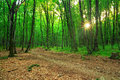 Forest in sunrise path is the green Stock Images