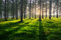 Forest at sunset with shadows Royalty Free Stock Photo
