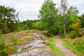 Forest sweden path through sigtuna Royalty Free Stock Image