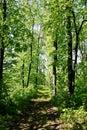 Forest - Telita
