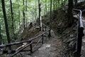 Forest tourist pathway