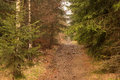Forest track in the mountains Royalty Free Stock Photo