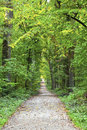 Forest track in wild oak forest Royalty Free Stock Images