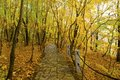 The forest trail through autumn woods Royalty Free Stock Image