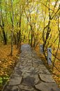 The forest trail through autumn woods Royalty Free Stock Photography