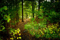 Picture : Forest trail comes  glowing