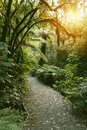 Forest trail walking in new zealand tropical Royalty Free Stock Images