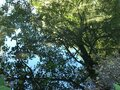 forest tree mirror water Royalty Free Stock Photo