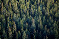 Forest tree tops Royalty Free Stock Photography
