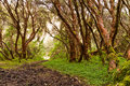Forest With Trees In Nature An...