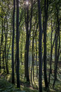 Forest trees. Nature green wood Royalty Free Stock Images