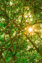 Forest trees nature green wood sunlight background in morning Royalty Free Stock Photography