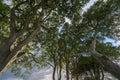 Forest Trees Nature Wood Backg...