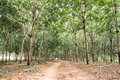 Forest Trees Nature