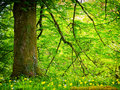 Forest trees at spring nice backgrounds Stock Photo