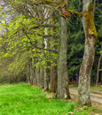 Forest and trees in summer time landscape background Royalty Free Stock Images