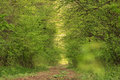 Forest tunel Royalty Free Stock Photo