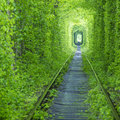 Forest tunnel and rail way in spring time Royalty Free Stock Photo