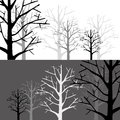Forest in two monotone tree and Stock Photos