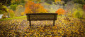 Forest view beautiful autumn colours and a park bench Stock Photos