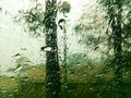 Forest view trough wet window Royalty Free Stock Photo