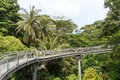 Forest walk of telok blangah hill park rainforest singapore Stock Photography