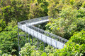 Forest Walk of Telok Blangah Hill Park rainforest Royalty Free Stock Photo