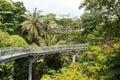 Forest walk of telok blangah hill park rainforest singapore Stock Photos
