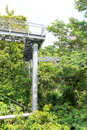 Forest walk of telok blangah hill park rainforest singapore Royalty Free Stock Photos