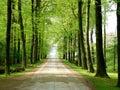 Bosque manera 1